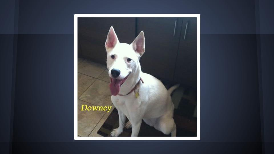 Downey, dog, MJS Pet Sitting satisfied customer