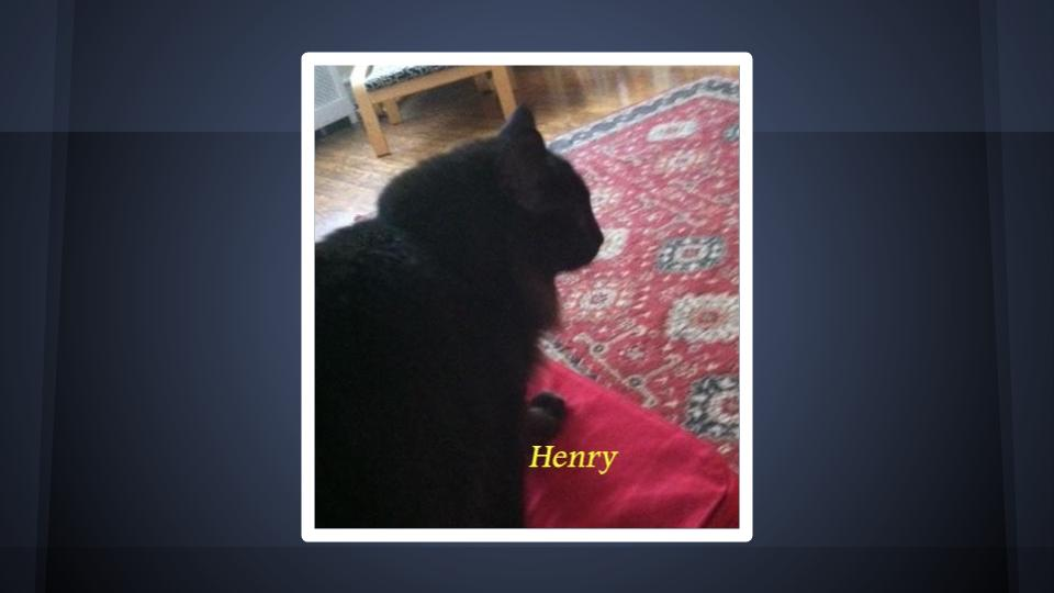 Cat, Henry, MJS Pet Sitting Satisfied Customer