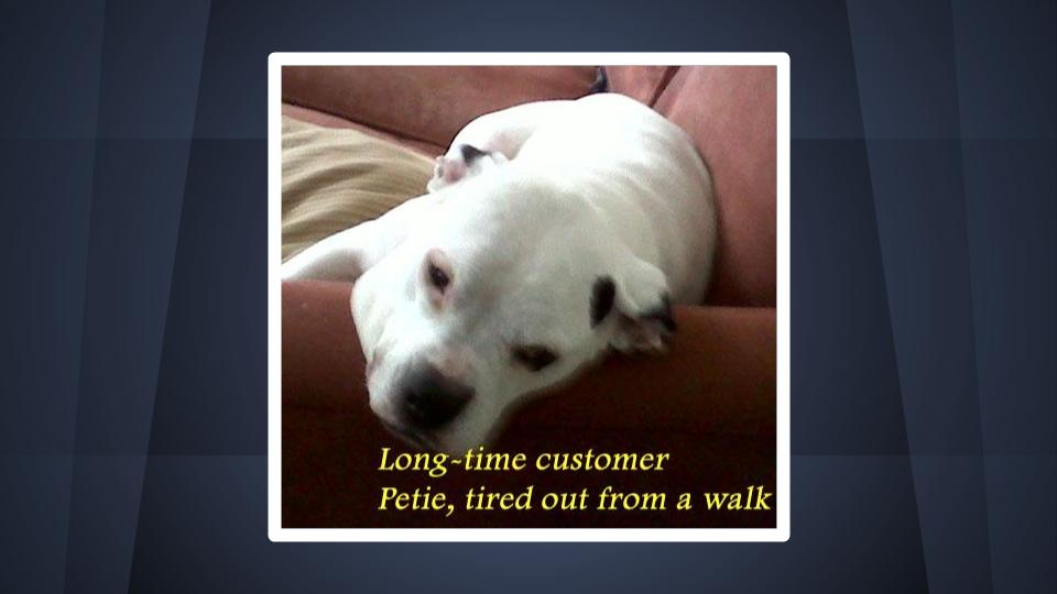 Dog, Petie, MJS Pet Sitting long-time satisfied customer