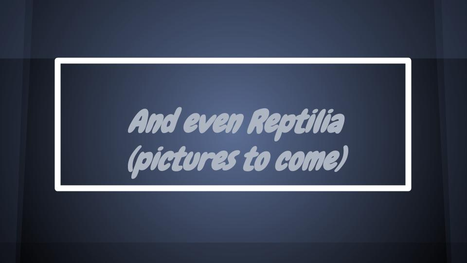 Title Slide, Reptilia section of MJS Pet Sitting Satisfied Customers